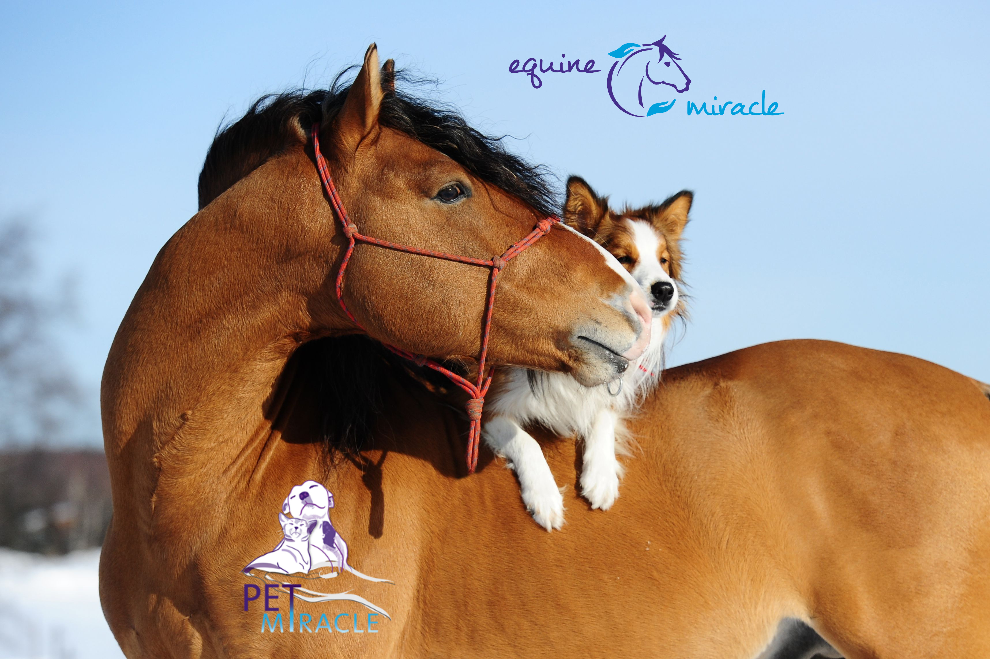 Equine Pet Miracle - Horse and Dog